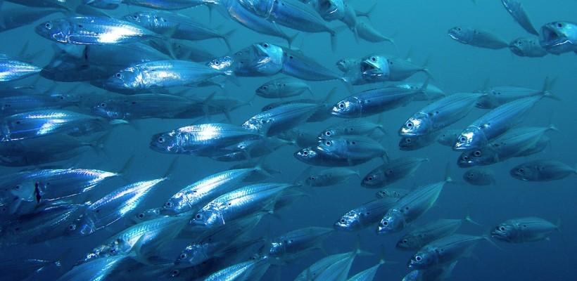 HGK dodjeljuje vaučere za sufinanciranje izrade projekata iz područja ribarstva