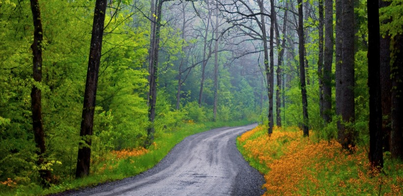 Country road in forest --- Image by © Ocean/Corbis