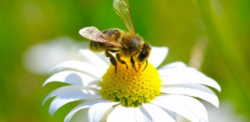 Pravilnik o provedbi mjera Nacionalnog pčelarskog programa za razdoblje od 2017. do 2019. godine