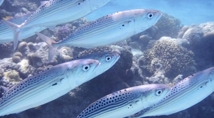 """MJERA IV.4. """"Prerada proizvoda ribarstva i akvakulture"""""""