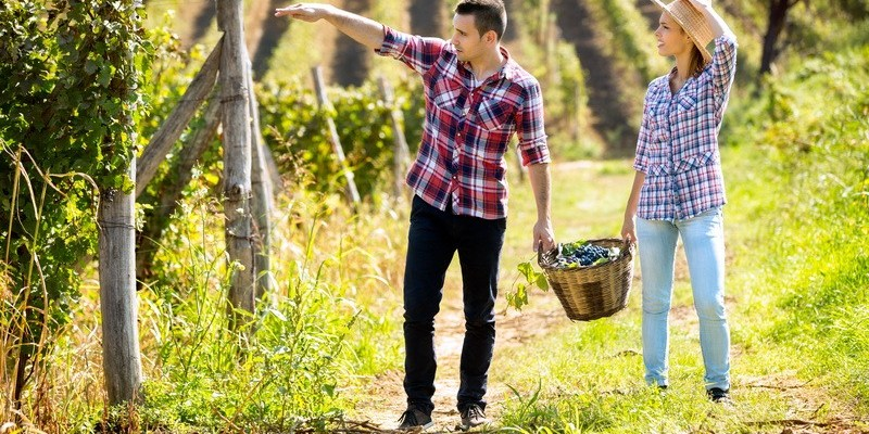 Podmjera 6.3. Potpora razvoju malih poljoprivrednih gospodarstava
