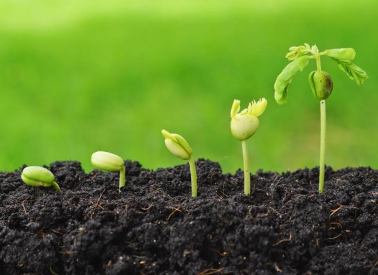 Podmjera 5.2.1. Obnova poljoprivrednog zemljišta i proizvodnog potencijala