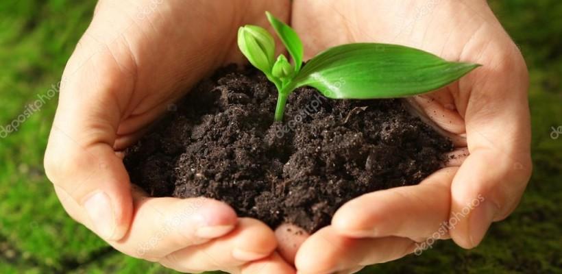 Program potpore primarnim poljoprivrednim proizvođačima u sektoru biljne proizvodnje i sektoru stočarstva u 2020. godini
