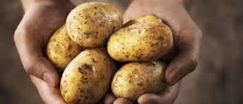 4.1.1. Restrukturiranje, modernizacija i povećanje konkurentnosti poljoprivrednih gospodarstava (krumpir)