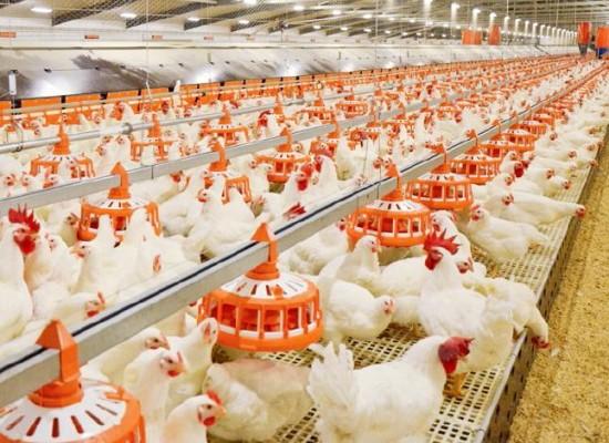 4.1.1.  Restrukturiranje, modernizacija i povećanje konkurentnosti poljoprivrednih gospodarstava (peradarstvo)