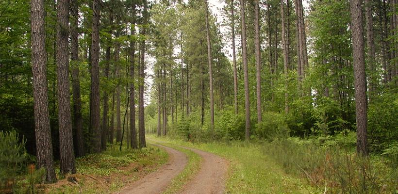 4.3.3. Ulaganje u šumsku infrastrukturu