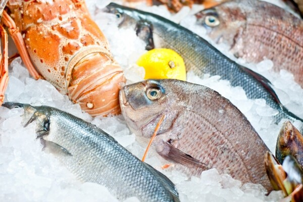 LAGUR ISTARSKA BATANA – 3.4.2. Ulaganje u malu infrastrukturu u području ribarstva i akvakulutre