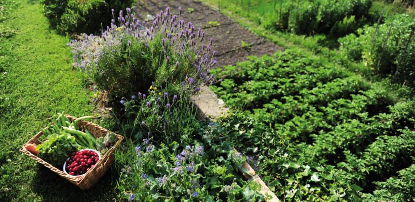 Potpora malim poljoprivrednim gospodarstvima- LAG Bilogora- Papuk