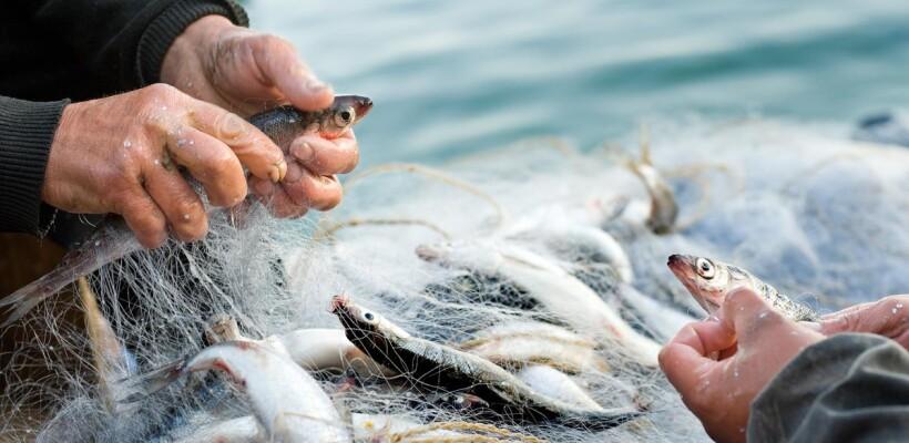 """Mjera IV.3. """"Stavljanje na tržište proizvoda ribarstva i akvakulture"""""""
