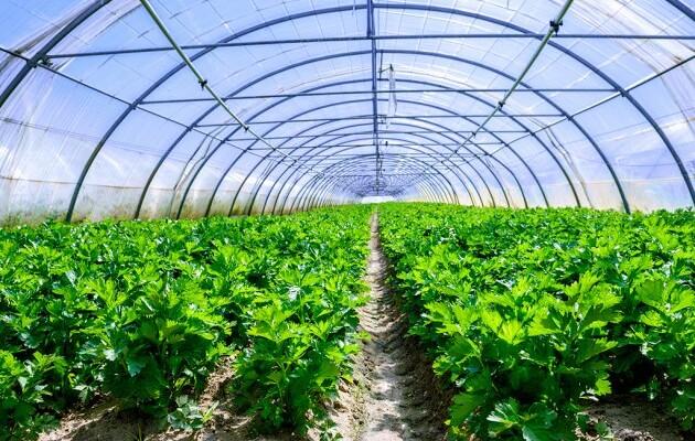 """4.1.1 """"Restrukturiranje, modernizacija i povećanje konkurentnosti poljoprivrednih gospodarstava"""" – ulaganja u proizvodnju povrća u zaštićenom prostoru – plasteniku"""