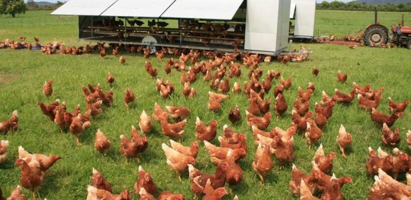 """4.1.1 """"Restrukturiranje, modernizacija i povećanje konkurentnosti poljoprivrednih gospodarstava"""" – ulaganja u alternativne načine držanja kokoši nesilica u sektoru peradarstva"""