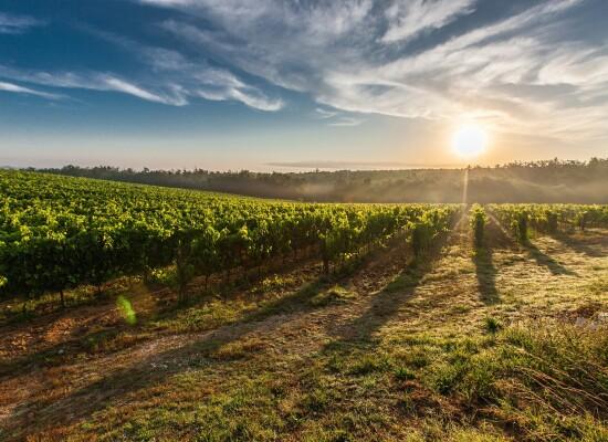 "4.1.1 ""Restrukturiranje, modernizacija i povećanje konkurentnosti poljoprivrednih gospodarstava"" – podizanje novih vinograda i/ili restrukturiranje vinograda stolnih kultivara"